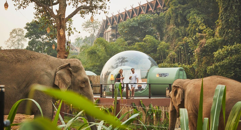 สัมผัสประสบการณ์ครั้งหนึ่งในชีวิตที่จะได้มีโอกาสใช้ชีวิตท่ามกลางธรรมชาติและช้าง ใน Jungle Bubble Lodge ของ อนันตราสามเหลี่ยมทองคำ แคมป์ช้าง แอนด์ รีสอร์ท (~ 200000 บาท)